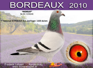 """""""Horus"""" won in 2010 een loodzware editie van Bordeaux aan 1004 m/m. Goed voor een 5e Int. tegen 6.690 jaarlingen."""